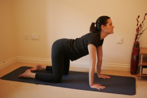 Bidalasana - Cat Stretch Yoga Pose