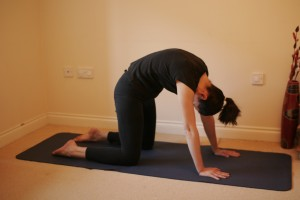 Bidalasana - Cat Stretch Yoga Posture