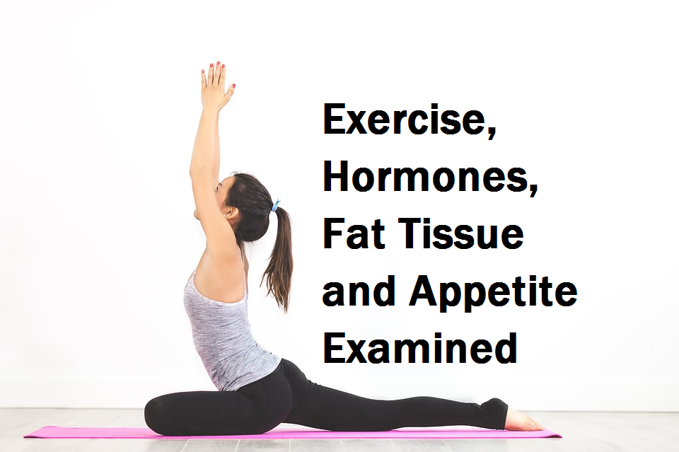Exercise Hormones Fat Tissue and Appetite Examined