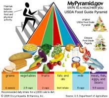 The 2005 MyPyramid