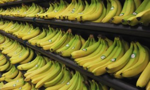 The family get through this many bananas each fortnight.