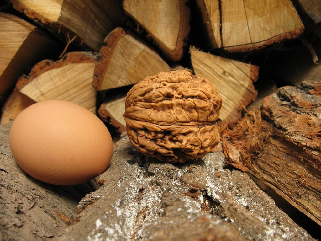 walnut and eggs