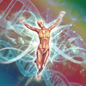 human genetics and dna