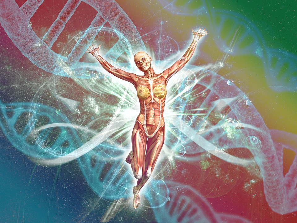 human genetics and dna