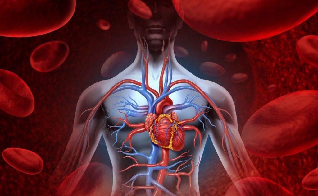 dr. irfan siddiqui vascular health