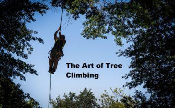 man climbing trees